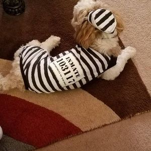 Other - Dog costume